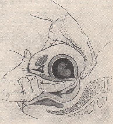 Можно ли самой прощупать беременность на ранних сроках