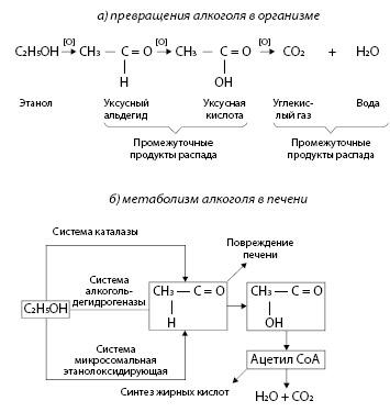 Рисунок 3.5. Метаболизм этанола